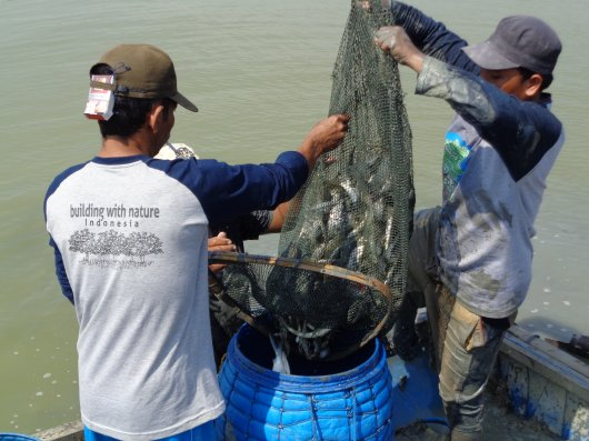 Wageningen University & Research supports Indonesian shrimp farmers by training them in Coastal Field Schools to make aquaculture sustainable and to support mangrove restoration. Photo: Blue Forests