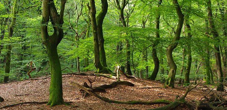 Forest Ecology and Forest Management Group WUR