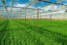 Vermindering aardgasgebruik leidt tot externe CO2-behoefte glastuinbouw