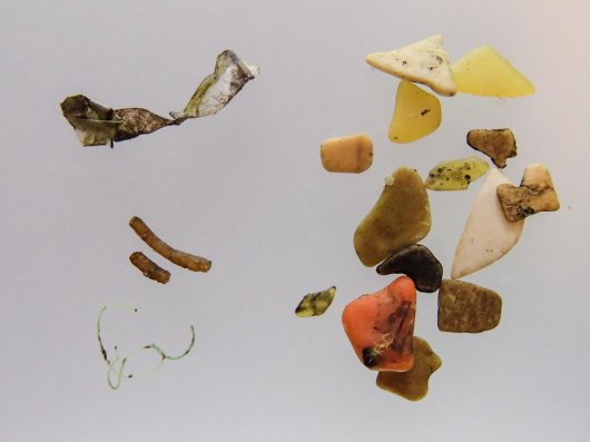 Photographs of all 13 Stomach contents that contained plastic