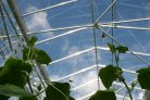 Autonomous Greenhouses Challenge livestreams 24-hour hackathon