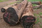 Genetic properties help identify illegally traded tropical hardwood