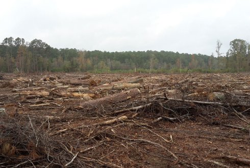 Large quantities of biomass sustainably sourced