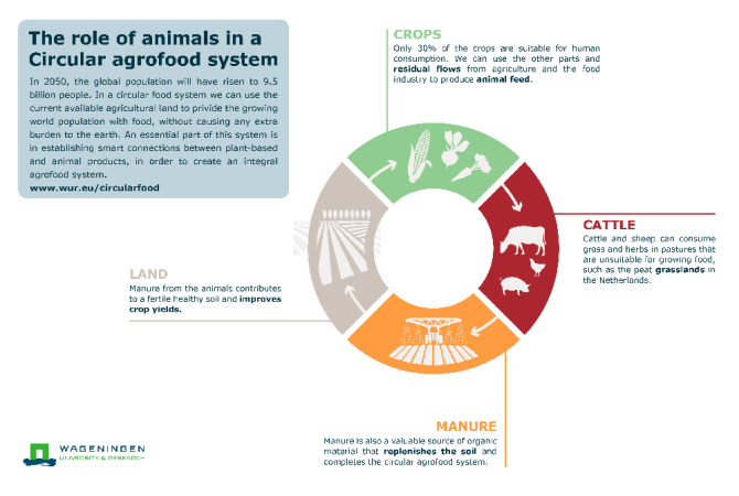 Infographic Circular Agrofood System