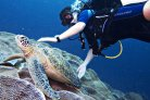 Sea turtle research: Nomads of the Caribbean