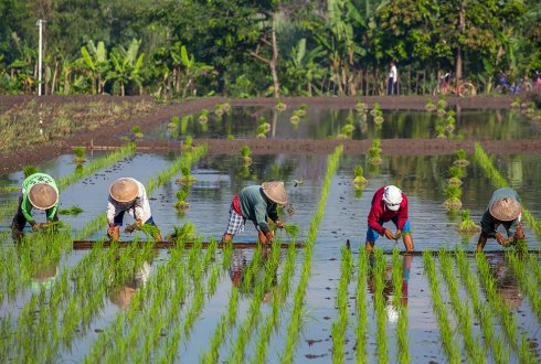 Collaboration with Climate Change, Agriculture and Food Security (CCAFS)