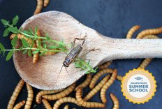 Summer School Insects for Food and Feed - from producing to consuming