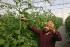 Jordanian vegetable growers increase sustainable production