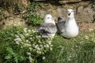 Jan Andries van Franeker in BBC2 'Autumnwatch' about fulmars and plastic waste