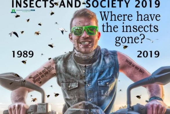Insects and Society