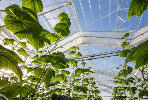 Redesign of production systems for circular horticulture & bulb cultivation