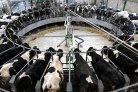 Nieuwe maat voor melkproductie