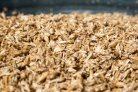 AF-18050 Protein Valorisation from Brewers Spent Grain