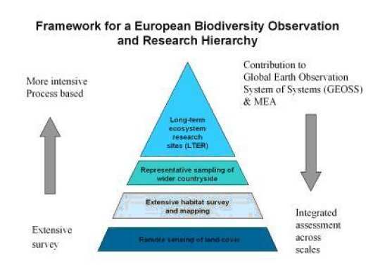 Framework for European Biodiversity Observation and Research Hierarchy