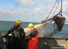 Boomkorsurvey/ Beam Trawl Survey