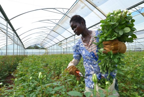 The African greenhouse; a toolbox