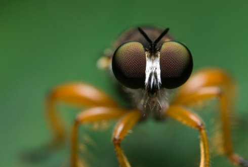 Insects and Society: Amazing insects
